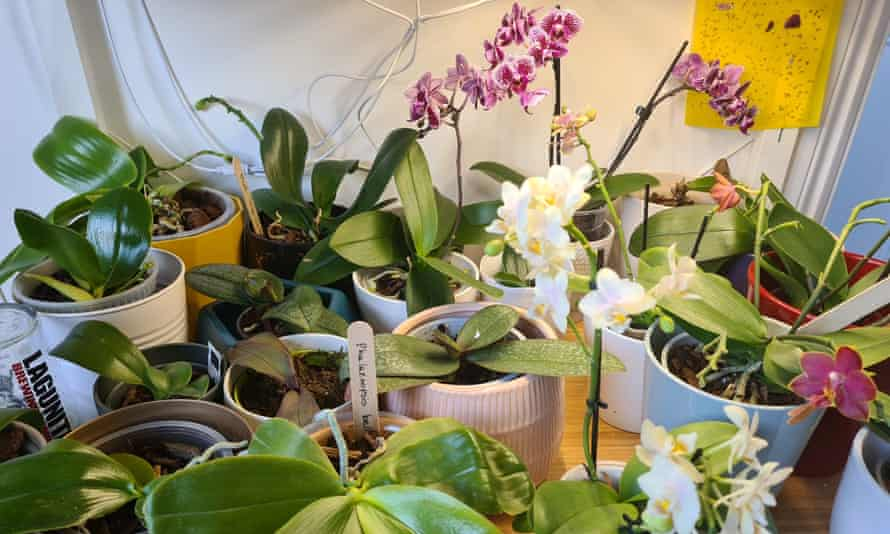 Some of Inajara Sphuaber's orchids, which she began to cultivate in lockdown.
