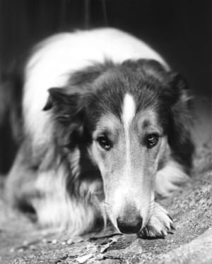 Lassie in Lassie Come Home, 1943