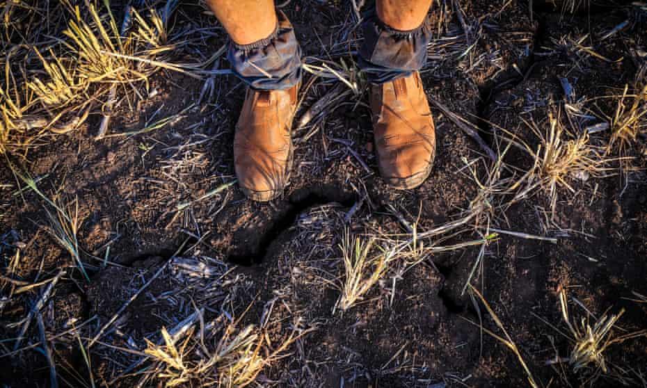 a farmer's dusty boots in a paddock