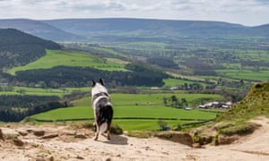 A black and white dog looking at the view from the peak of Rosebery Topping