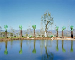Forest is an eight-year project investigating the politics of recreating forests in new Chinese cities, transplanting trees and transforming urban spaces