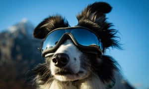 """Meagaidh wears """"doggles"""" to protect her eyes during travel by helicopter."""