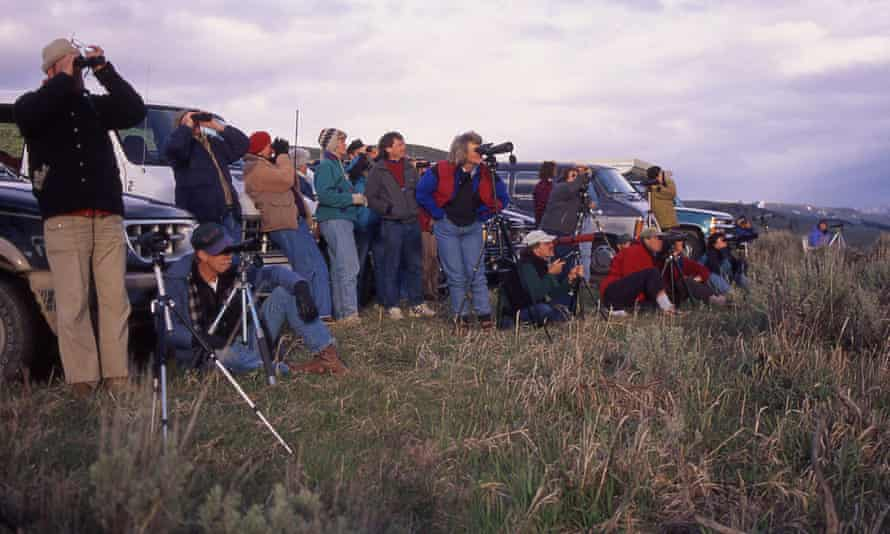 People watch wolves from Lamar Valley, 1995.