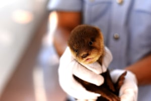 Police have seized 10 otters, a protected species, which were found in the boot of a taxi in Fangchenggang, China