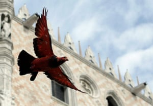 One of Charrière's coloured pigeons in flight in Venice as part of the 2012 Architecture Biennale.