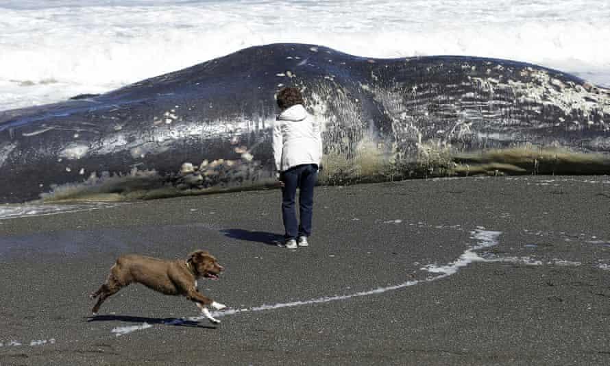 Whale in California