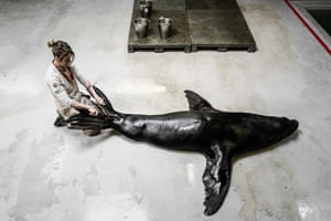 A zookeeper at Vincennes zoo interacts with a sea lion during its training, aimed at making medical interventions easier.