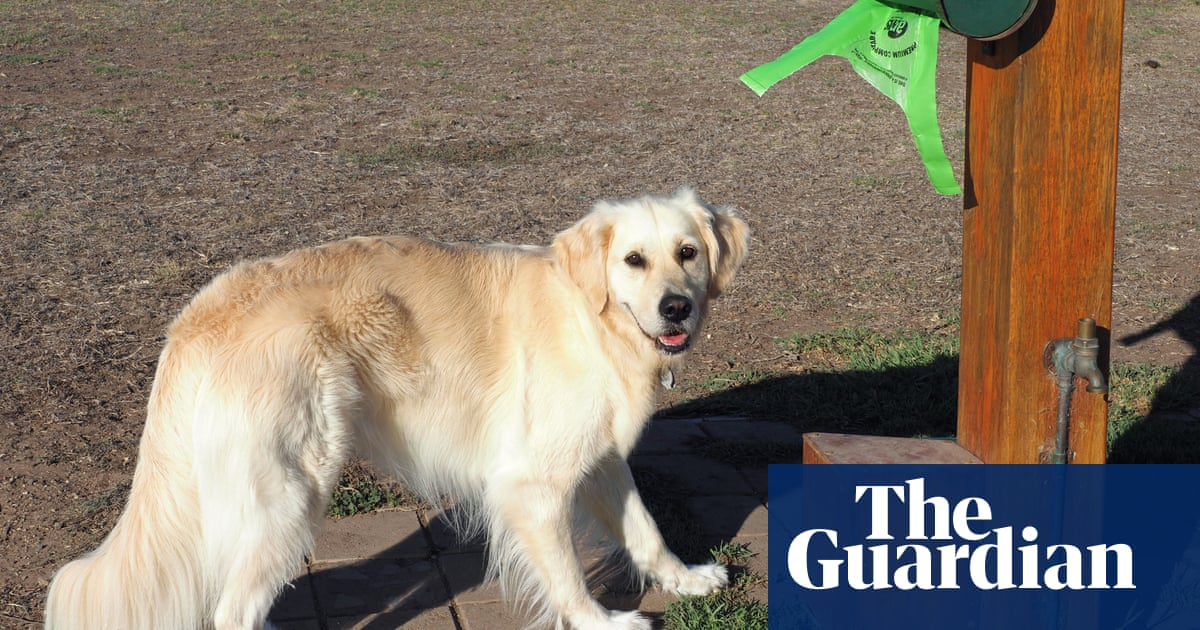 Australian dogs poo the weight of the Sydney Harbour Bridge each month. Where should it go?