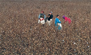 Workers pick cotton in a field in Uzbekistan.