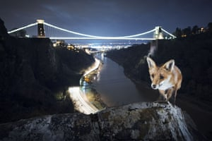 Bristol Fox by Sam HobsonAt this recognisable landmark in front of the Clifton suspension bridge I found a secluded spot where teenagers like to hang out and local foxes would come to look for leftovers. One night, I was setting up my camera in the early evening and a fox came out of the shadows. It came straight over, looked up at me, then proceeded to try and pinch something from my open camera bag. After that, it walked up this small ridge and I saw the picture I wanted to capture. It took about two weeks of long, cold nights before it looked up at just the right moment.