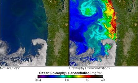 NASA's image of the algal bloom.
