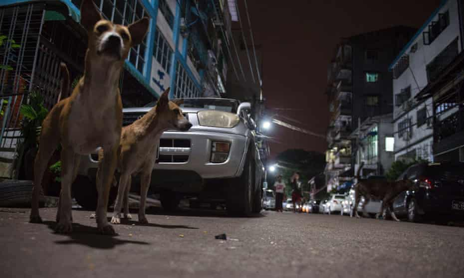 Dogs on Yangon streets