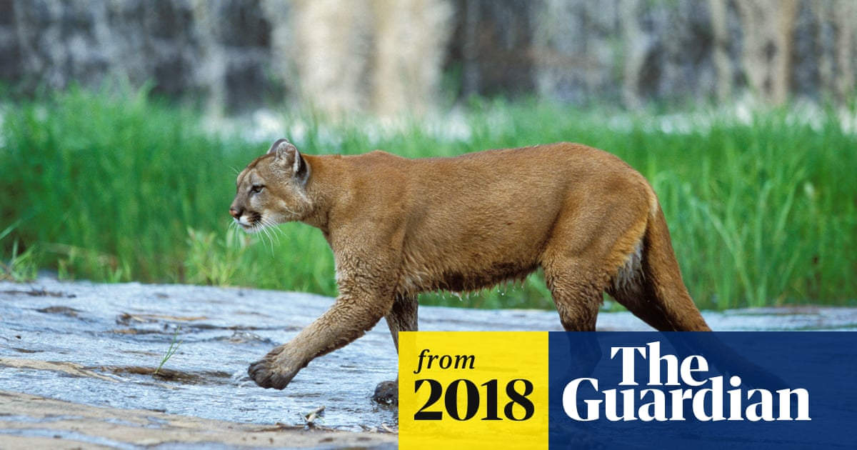 Mountain bikers in fatal cougar attack did everything right