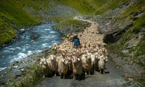 Tusheti, Georgia: sheep