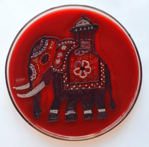 The Noble Tusker by Dharshika Jayasuriya from the University of Colombo in Sri Lanka
