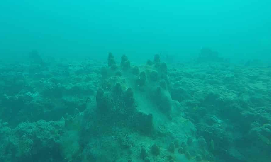 Pillar coral under layers of sediment disturbed by dredging.
