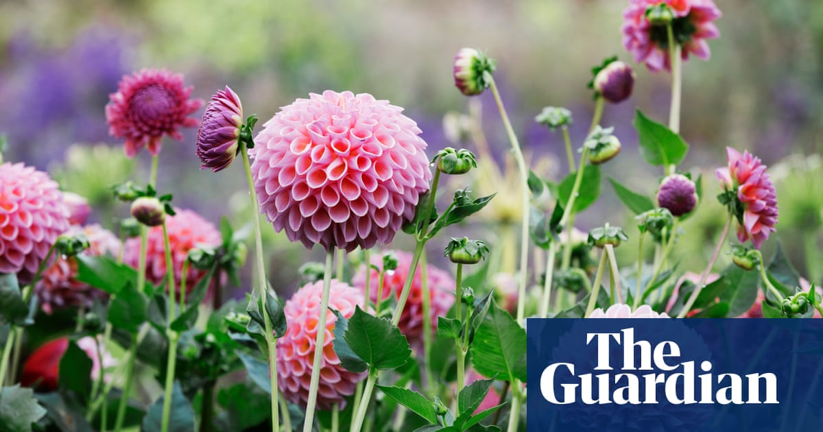 Keep sowing! 15 easy July gardening tasks to prolong the growing season