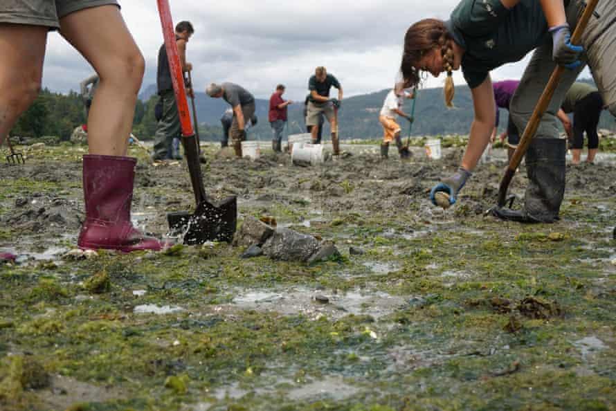 people work on clam garden