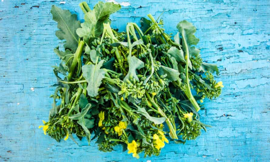 A flowering rapini on a blue background.
