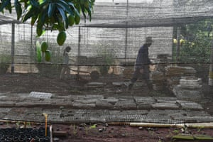 Workers tend to crop seedlings under a protective nylon film at the Alamar organic farm, in an outlying Havana neighbourhood, Cuba.