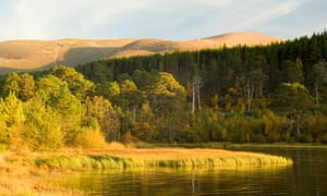 Loch Morlich and Glenmore Forest in autumn, looking up to Cairngorm mountain, Scotland, in the evening.