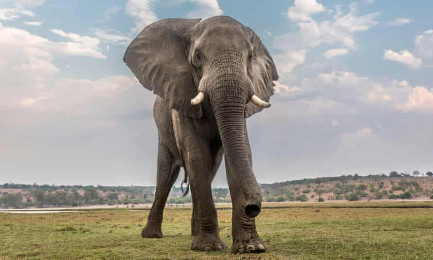 Last year the UN announced that elephants were being killed faster than they could be born.