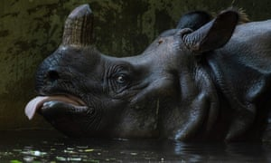 As temperatures rose above 30C, a rhinoceros cools off at Berlin zoo.