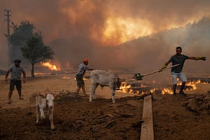 Men gather sheep to take them away from an advancing fire in Mugla, Marmaris district.