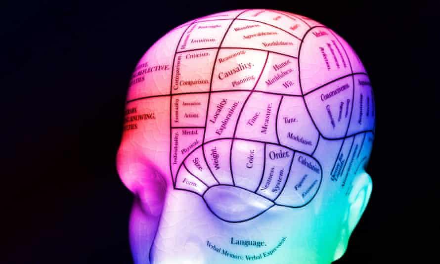 Phrenology HeadAW436M Phrenology Head