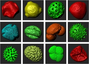 Pollen samples, some of which date back thousands of years, in 3D prints produced by Cardiff University's bioimaging hub.