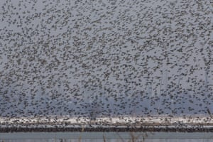 Migratory birds fly above the frozen waters of a wetland in Hokersar, north of Srinagar, in Indian-controlled Kashmir