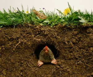 'Unlike other species, such as the grey squirrel, which were introduced by humans in recent centuries, the resident mole has lived in Britain for more than 350,000 years'