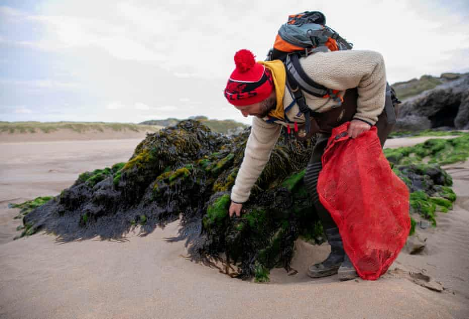 Laver lover Jonathan Williams scouts the rocky shores at low tide