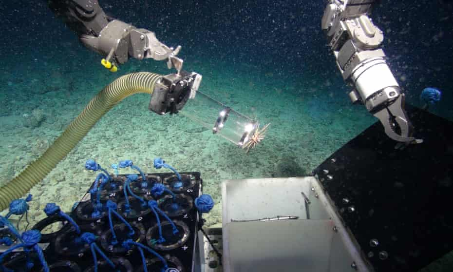 Researchers from Plymouth University have found antibacterial microbes on deep-sea sponges.