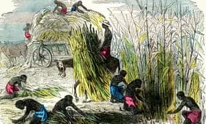 West Indies slaves harvesting sugar cane