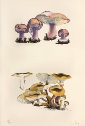 Mushroom Book 1972. Scan of 63/75, Plate I, Artwork by Lois Long Courtesy of the John Cage Trust.