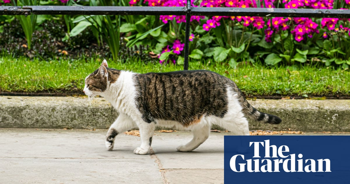 Cat owners may be forced to microchip pets as UK thefts soar