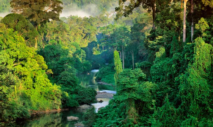 River in Lowland Rainforest of Danum Valley Sabah State, Borneo, Malaysia --- River in the Lowland rainforest of the Danum Valley on Borneo, Sabah State, Malaysia. --- Image by Frans Lanting/Corbis
