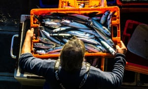 A man carries a crate of freshly caught mackerel