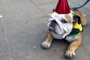 Even the dogs get into the carnival spirit
