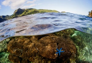 Coral and sea life in American Samoa. With two canneries on the island, the country is a hot spot for tuna fishing boats.