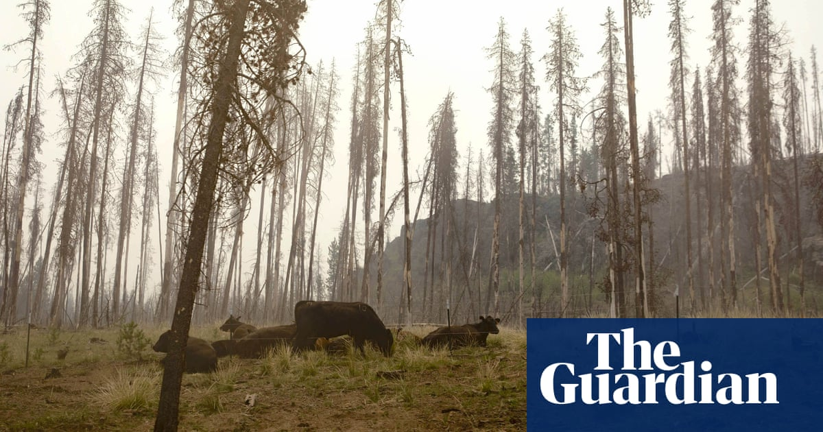 'Smoke cows': Could more US wildfires mean less milk from Oregon's huge dairy herd?