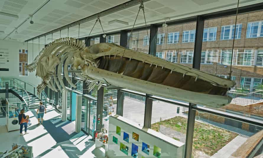 fin whale skeleton zoology museum cambridtge