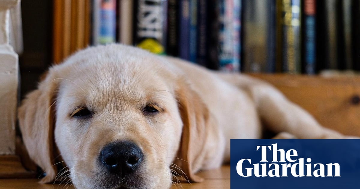 'It was love at first sight': readers on their new lockdown pets