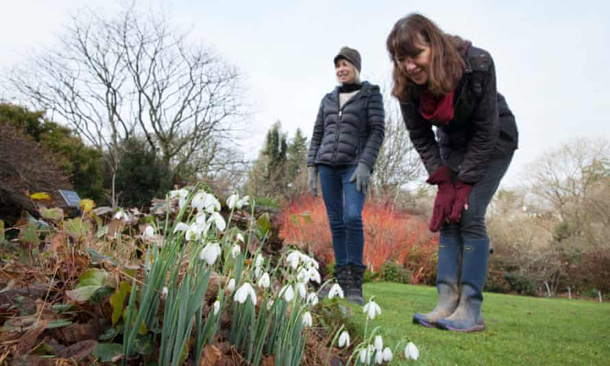 Workers inspect snowdrops