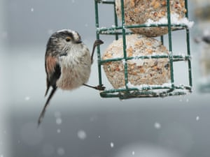 Sightings of long-tailed tits were up 16% on last year.