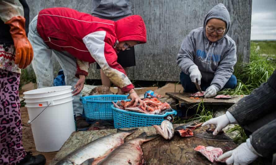 Yupik women prepare freshly caught salmon for curing. Yupik culture is threatened as sea ice melts.