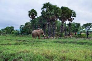 At dusk, elephants get closer to villages