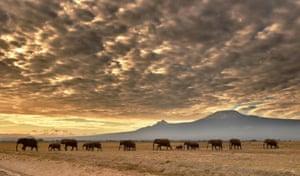 A herd of elephants in Amboseli national park, Kenya