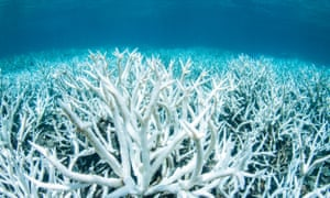 worst global coral bleaching event eases as experts await next one